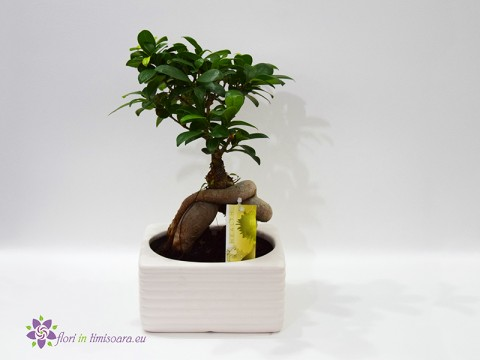 Bonsai in ghiveci ceramic
